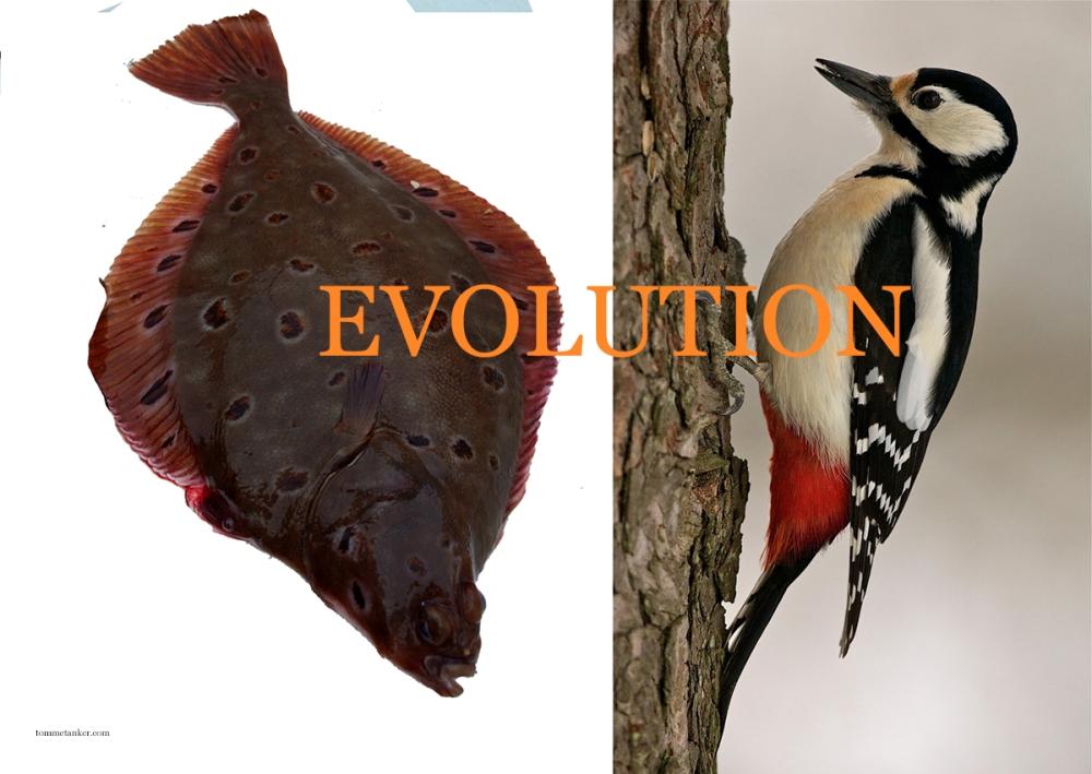 evolution_spetter_tommetanker