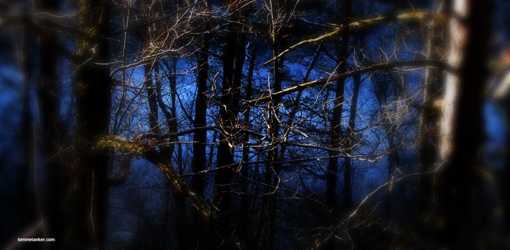 lys_blått_skog_tommetanker