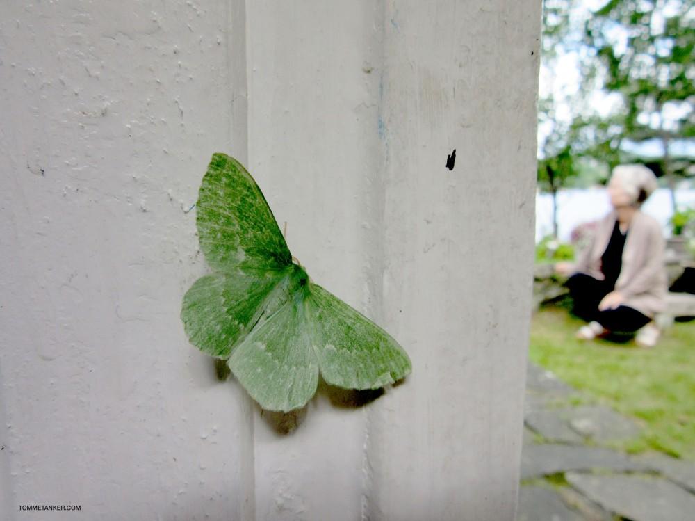 sommerfugl_tommetanker