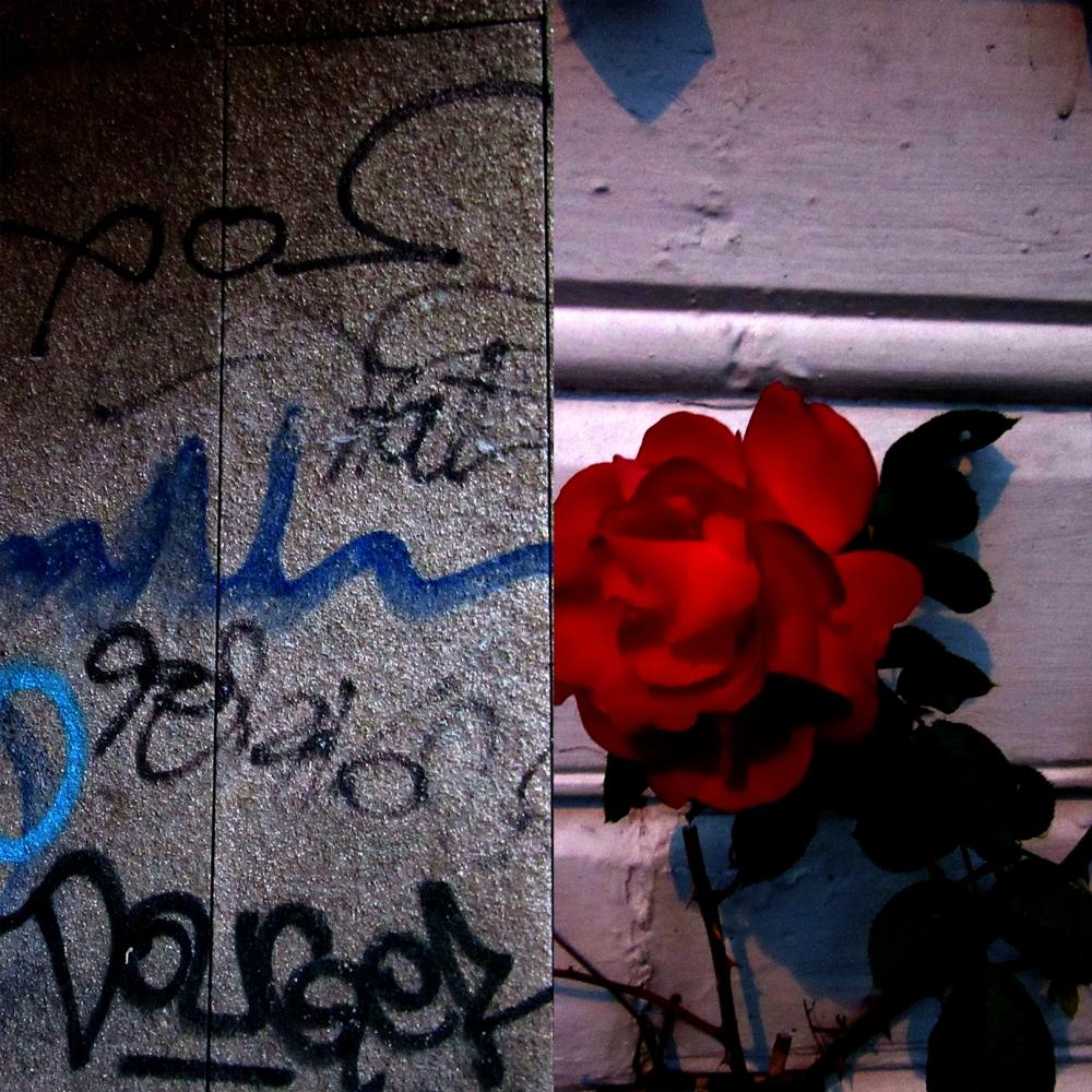 rose_tagging_tommetanker