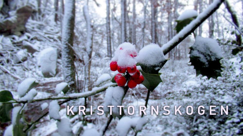 kristtornskogen_tommetanker