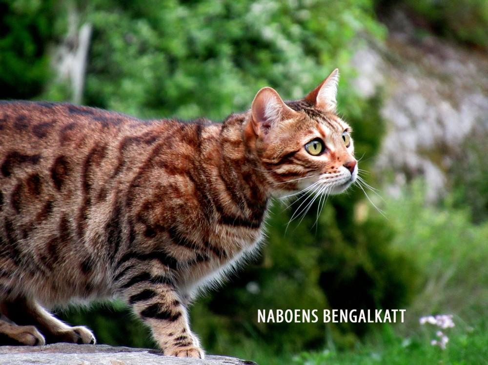 naboens_katt_3_tommetanker