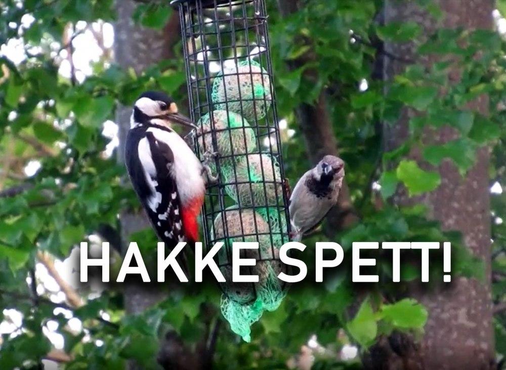 HAKKESPETT_1tommetanker