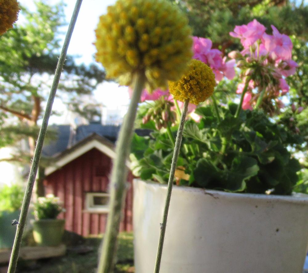 blomster4