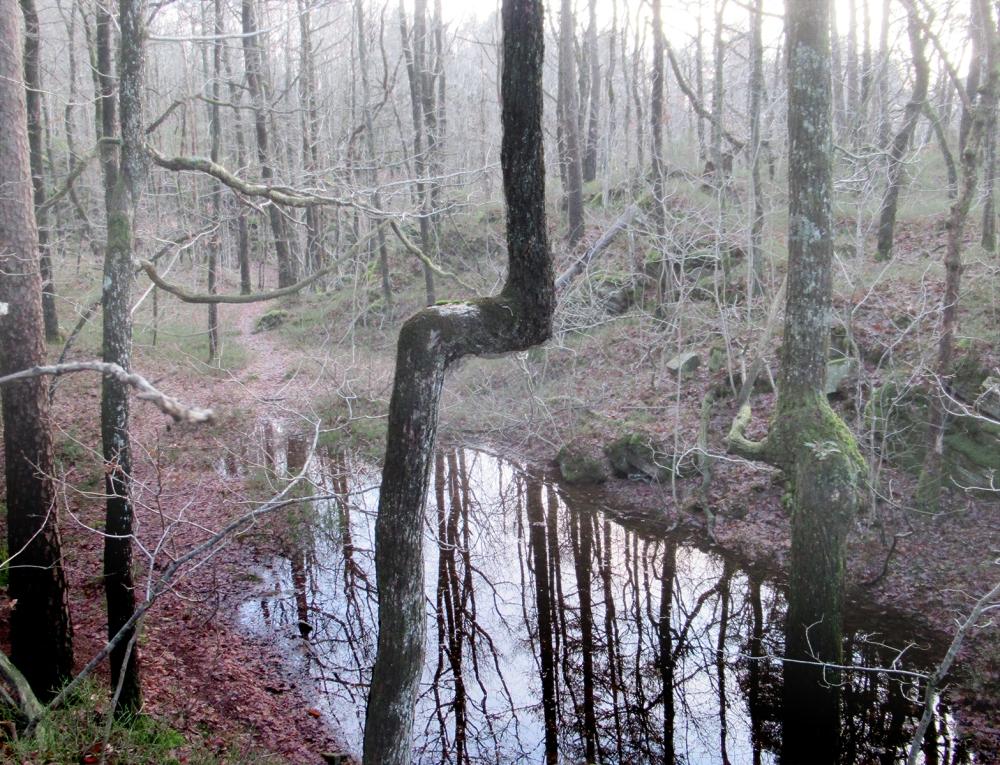 trær_jeg_har_møtt_2_tommetanker