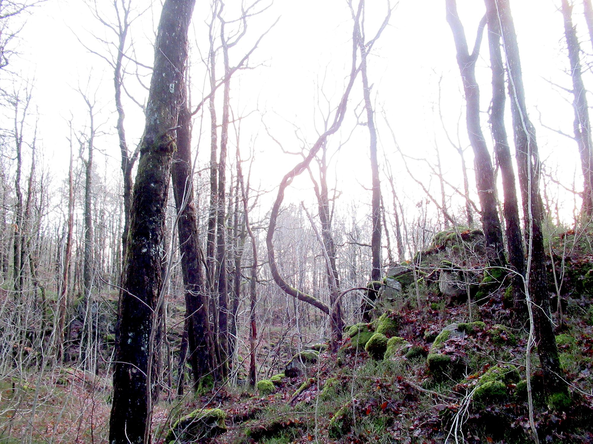 trær_jeg_har_møtt_3_tommetanker