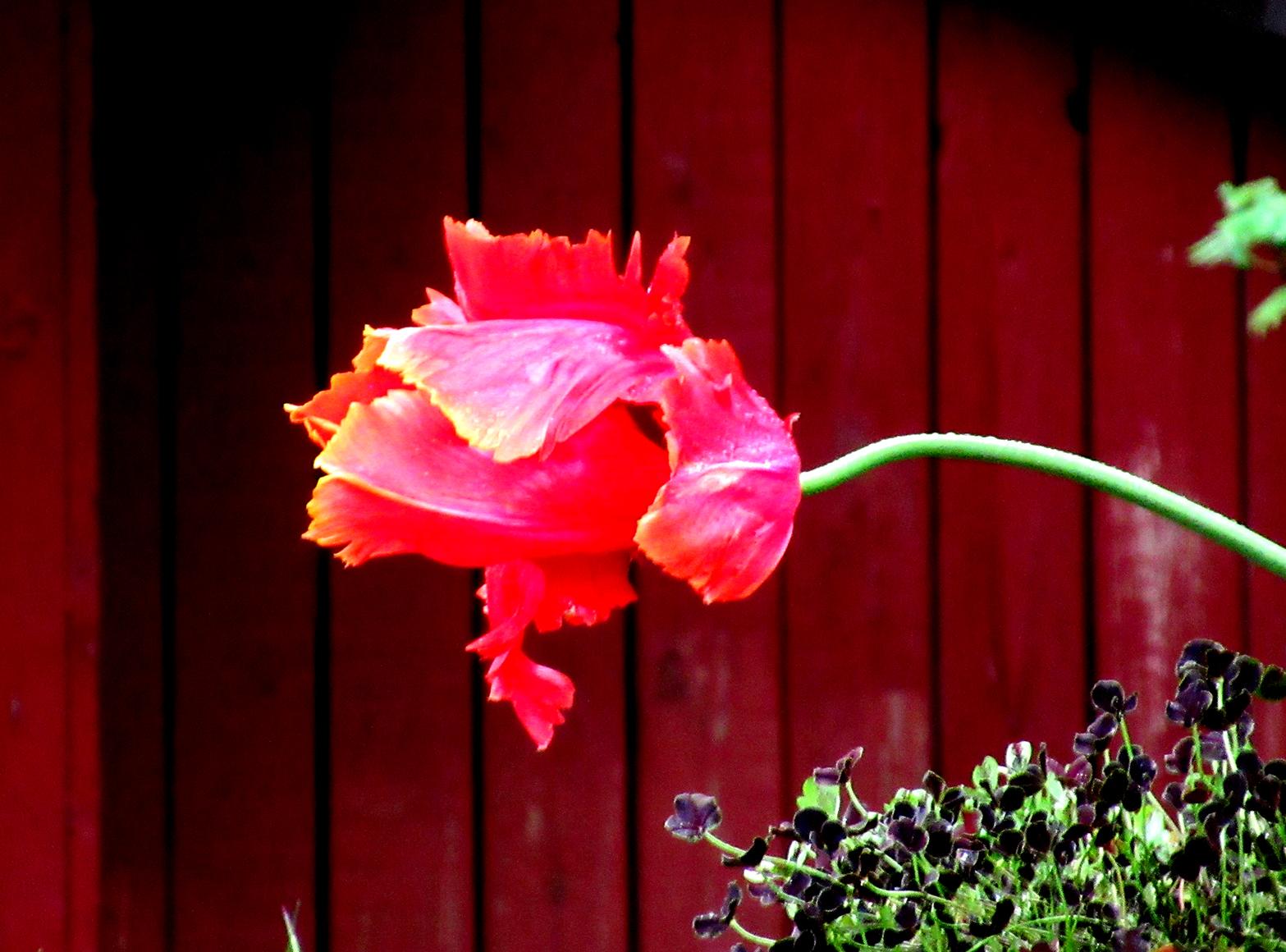 blomst_2_tommetanker
